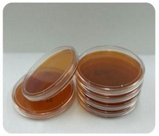 Placas de Petri Preparadas - Sabouraud Dextrosa Agar. De 90mm