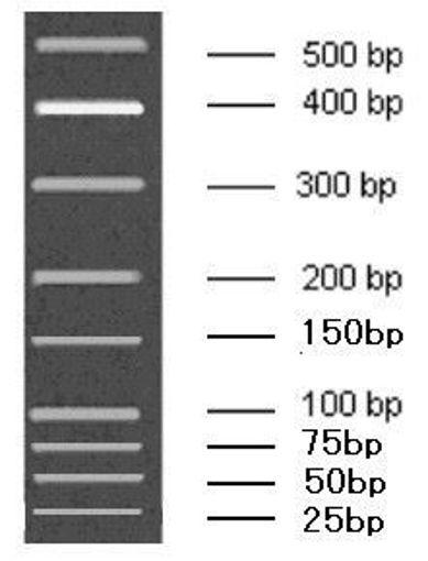 25-500bp Low Range DNA Marker A